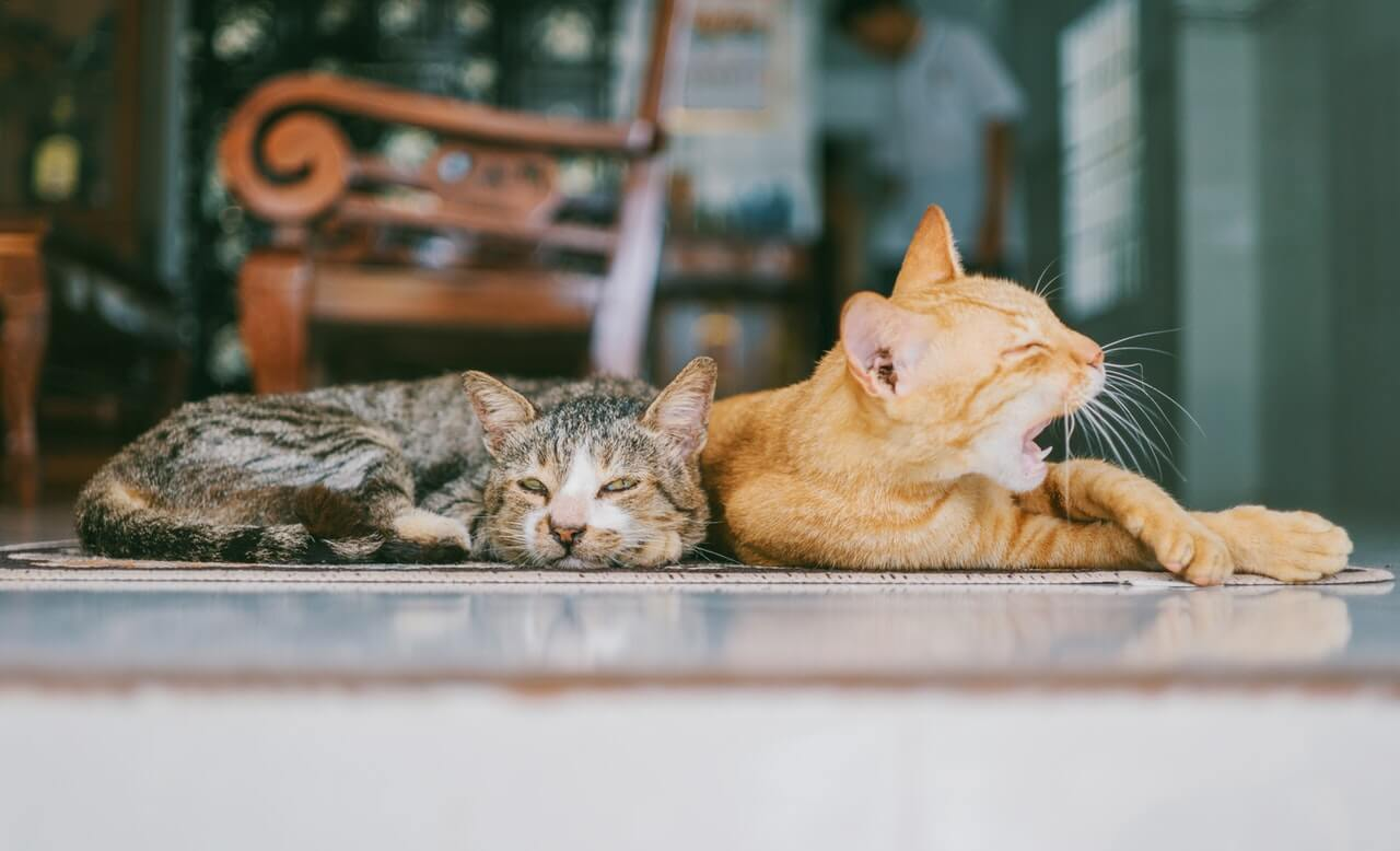 cats sleeping in house